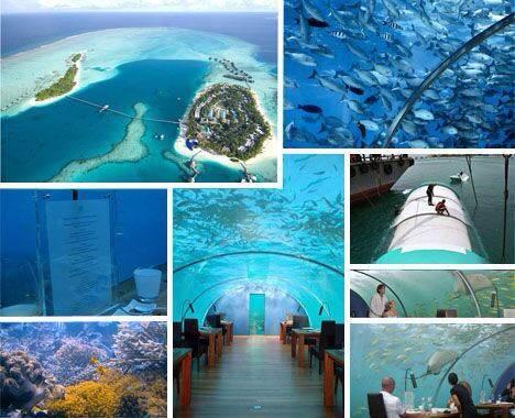 壁纸 海底 海底世界 海洋馆 水族馆 桌面 468_380